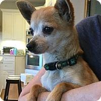 Adopt A Pet :: Ruby - Sunnyvale, CA