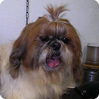 Adopt A Pet :: Sunshine - Yucaipa, CA