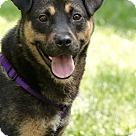 Adopt A Pet :: Jonah