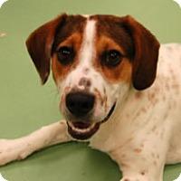 Adopt A Pet :: Alex - Avon, NY