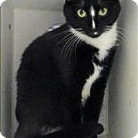 Adopt A Pet :: Campbell - Topeka, KS