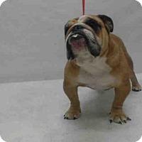 Adopt A Pet :: PORK CHOP - Orlando, FL