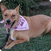 Adopt A Pet :: Priscilla - Palo Alto, CA