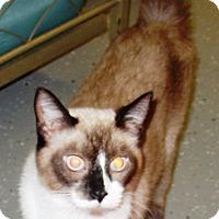 Adopt A Pet :: Jinx - Kalamazoo, MI