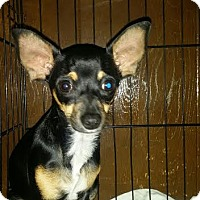 Adopt A Pet :: Mini - (RC) - Santa Ana, CA