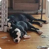 Adopt A Pet :: Lady 1 - Warren, MI