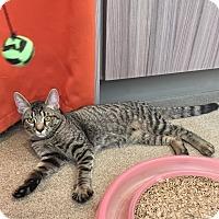 Adopt A Pet :: Raymond - Peace Dale, RI