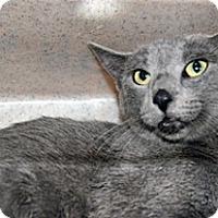 Adopt A Pet :: 319081 - Wildomar, CA