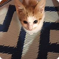 Adopt A Pet :: Rascal - Whitehall, PA