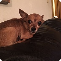 Adopt A Pet :: Rusty - Ardmore, OK