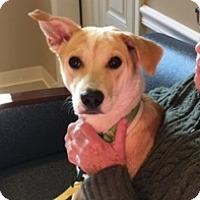 Adopt A Pet :: SOFIA - Albany, NY