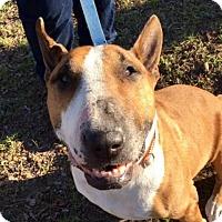 Adopt A Pet :: Picasso - Austin, TX