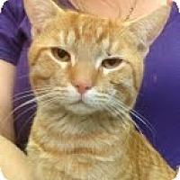 Adopt A Pet :: Fedyenka - Modesto, CA