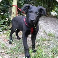Adopt A Pet :: Hershal - Fort Lauderdale, FL