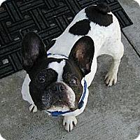 Adopt A Pet :: Fabian - Temecula, CA