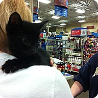 Adopt A Pet :: Jade - Pittstown, NJ