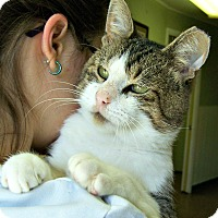 Adopt A Pet :: Crackerjack (1 GR8 CAT) - Toledo, OH