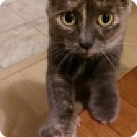 Adopt A Pet :: Lunara - Vancouver, BC