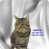 Adopt A Pet :: Memphis - West Lafayette, IN