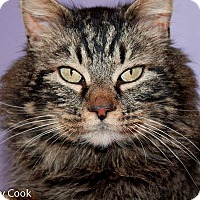 Adopt A Pet :: Hercules - Ann Arbor, MI
