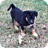 Adopt A Pet :: ASPEN - EDEN PRAIRIE, MN