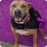 Adopt A Pet :: Mimi - St. Louis, MO