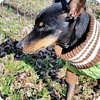Adopt A Pet :: Skeeter - Genoa City, WI