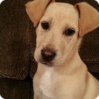 Adopt A Pet :: Beau Bacious - Nashville, TN