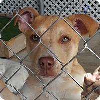 Adopt A Pet :: Gemma - san antonio, TX