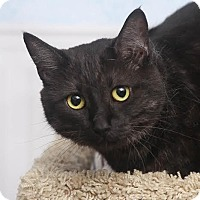 Adopt A Pet :: Toto - Chippewa Falls, WI