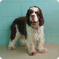 Adopt A Pet :: YoYo - Kannapolis, NC