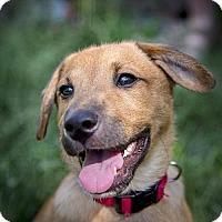 Adopt A Pet :: Moe (Mochi) - Boulder, CO