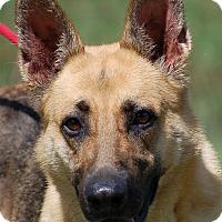 Adopt A Pet :: Cruzer AD 06-16-16 - Preston, CT