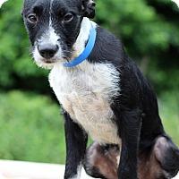 Adopt A Pet :: Lance - Waldorf, MD