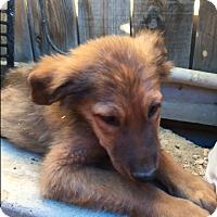 Adopt A Pet :: Reno - Thousand Oaks, CA