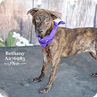 Adopt A Pet :: BETHANY - Conroe, TX