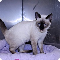 Adopt A Pet :: Sushi - Lumberton, NC
