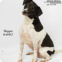 Adopt A Pet :: Skipper - Baton Rouge, LA