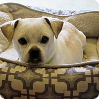 Adopt A Pet :: Peanut - Grinnell, IA