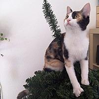 Adopt A Pet :: Venus - Los Angeles, CA