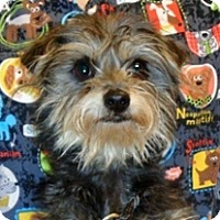Terrier (Unknown Type, Small) Mix Dog for adoption in Wildomar, California - Alice