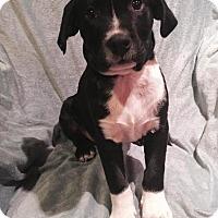 Adopt A Pet :: Timmy - Ocala, FL
