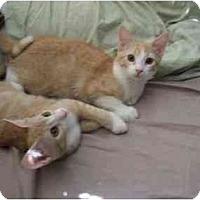 Adopt A Pet :: Annabella & Gabriella - Pasadena, CA