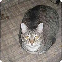 Adopt A Pet :: LULU (KC) - Little Falls, NJ