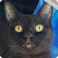 Adopt A Pet :: Sugar - Winchester, CA