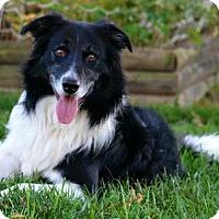 Adopt A Pet :: Cai - Bellevue, NE