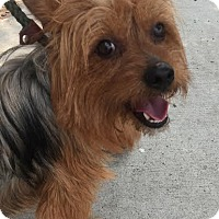 Adopt A Pet :: Russ - Rockaway, NJ