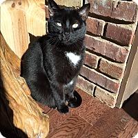 Adopt A Pet :: JB (James Bond) - Byhalia, MS