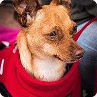 Adopt A Pet :: Cody - San Marcos, CA