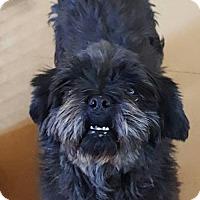 Adopt A Pet :: Betsy - Scottsboro, AL